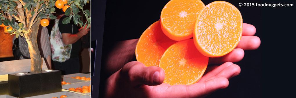 Clementine del Marocco in Expo