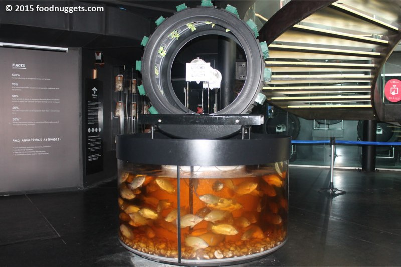 Sistema acquaponico nel padiglione del Belgio in Expo
