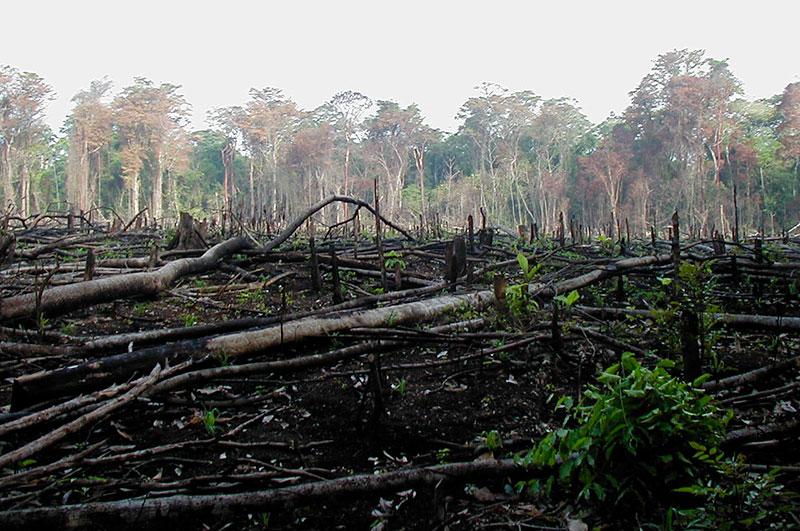 Deforestazione nella foresta amazzonica